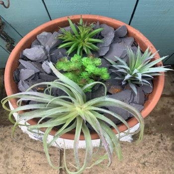 Set of 4 Assorted Artificial Succulent Plant Heads