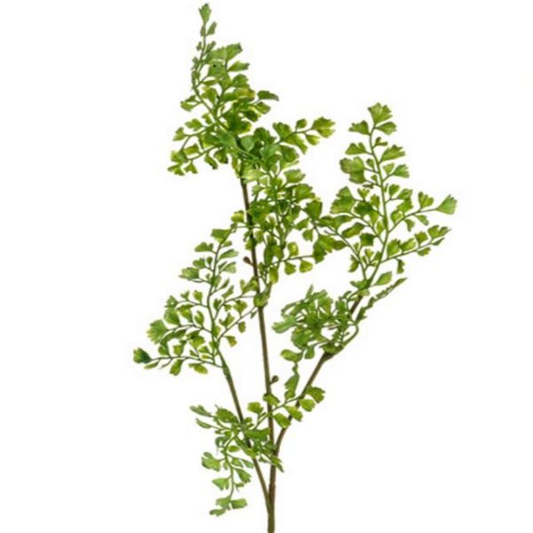 https://shared1.ad-lister.co.uk/UserImages/7eb3717d-facc-4913-a2f0-28552d58320f/Img/artificialle/68cm-Maidenhair-Fern-Spray.jpg