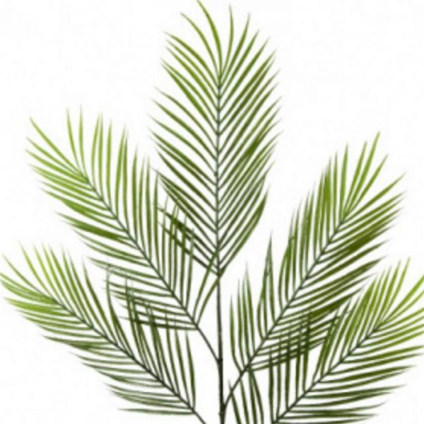 https://shared1.ad-lister.co.uk/UserImages/7eb3717d-facc-4913-a2f0-28552d58320f/Img/artificialle/Artificial-Areca-Palm-Tree-Branch.jpg