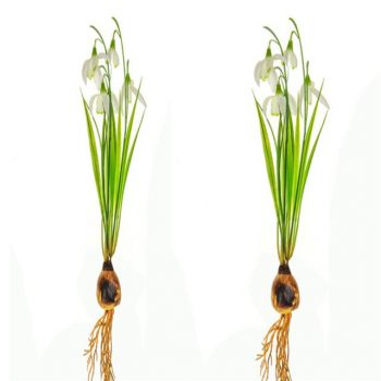 Set of 2 Artificial Snowdrop Bundles with Bulb