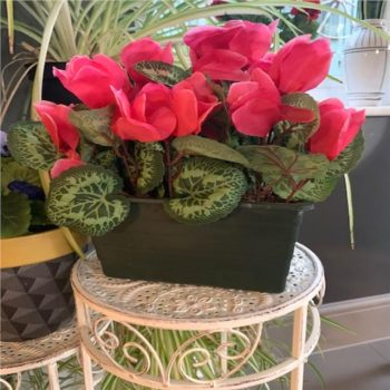 Artificial Hot Pink Cyclamen Plant in Trough Planter