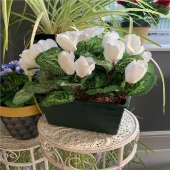 Artificial White Cyclamen Plant in Trough Planter