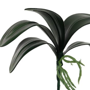 Artificial Orchid Leaves with Roots