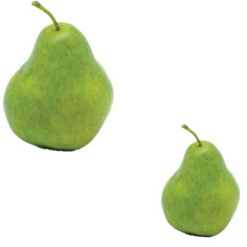 https://shared1.ad-lister.co.uk/UserImages/7eb3717d-facc-4913-a2f0-28552d58320f/Img/artificialfr/Pair-of-Artificial-Pears-Green.jpg
