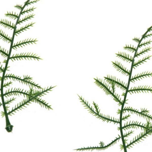https://shared1.ad-lister.co.uk/UserImages/7eb3717d-facc-4913-a2f0-28552d58320f/Img/artificialfo/Asparagus-Fern-leaf-Plastic.jpg