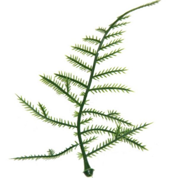 https://shared1.ad-lister.co.uk/UserImages/7eb3717d-facc-4913-a2f0-28552d58320f/Img/artificialfo/Plastic-Asparagus-Fern-Leaf.jpg