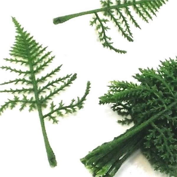 https://shared1.ad-lister.co.uk/UserImages/7eb3717d-facc-4913-a2f0-28552d58320f/Img/artificialfo/17cm-Flocked-Asparagus-Fern-Leaves.jpg