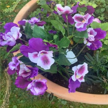 Artificial Purple and White Large Pansy Bush